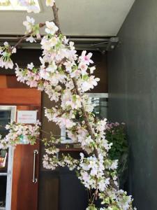 桜も咲き始めてきて、これからは楽しむのにもいい季節です(^^